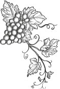 Hosmer Winery Estates History Vines